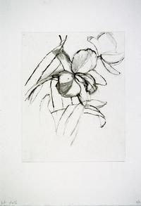 "Trial proof for color intaglio print, ""Hazel Boyd Eureka (orchid),"" by visiting artist Sylvia Plimack Mangold, from the Ninth Mount Holyoke College Printmaking Workshop"