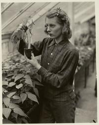 Farmerette examining a plant in Talcott Greenhouse