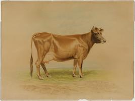 """Cow Brand Soda,"" cardboard sign for baking soda, produced from a watercolor by A. D. Turner"