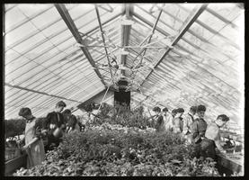 Floriculture Class in Greenhouse 1904
