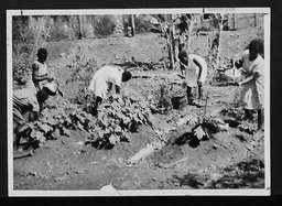 Uganda: Agricultural training YWCA of the U.S.A. photographic records